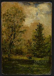 Image of Forest Scene