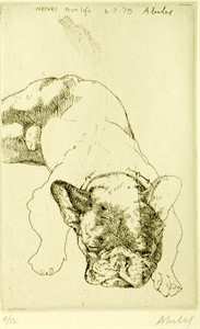 Image of French Bulldog (Henri from Life)