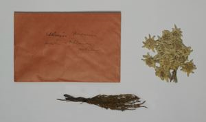 Image of Pressed Edelweiss and Heather with Envelope