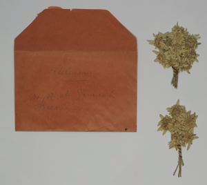 Image of Pressed Edelweiss and Envelope