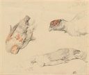 Image of Studies of Dead Birds